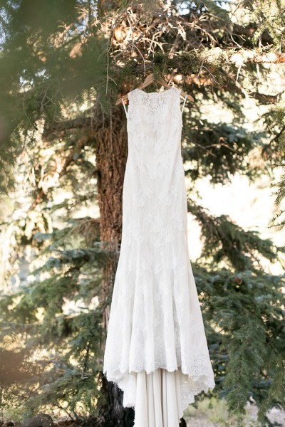 A Colorado Pine Tree and Wedding Dress