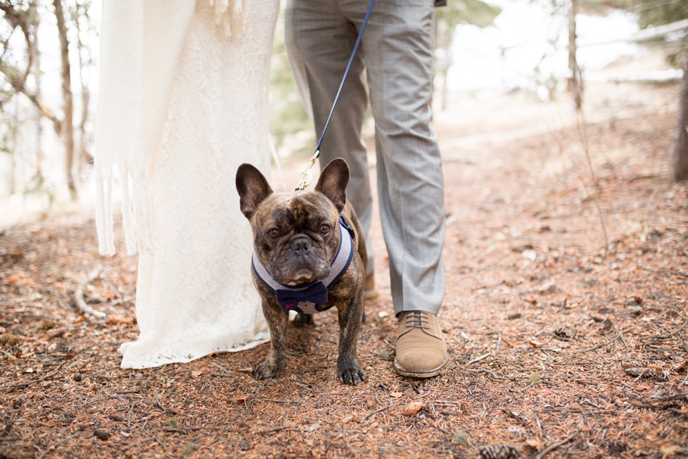 0 French Bulldog Creede Wedding