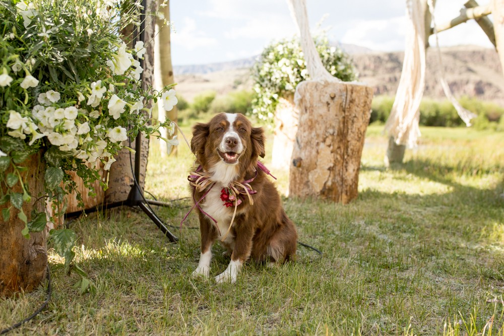 19 wedding dog
